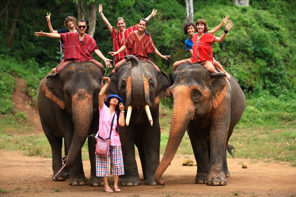 1thailand-elephants
