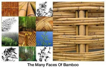 bamboo-uses1